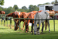 CheltPoloCup-14