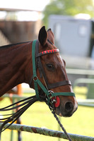 CheltPoloCup-11