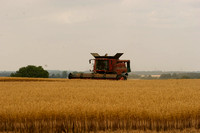 Harvest at Coneygar Farm